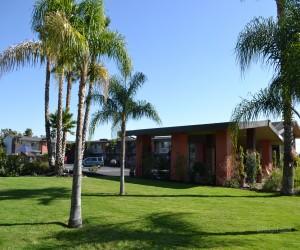 Days Inn & Suites Lodi Exterior - Palm Trees at Days Inn Lodi